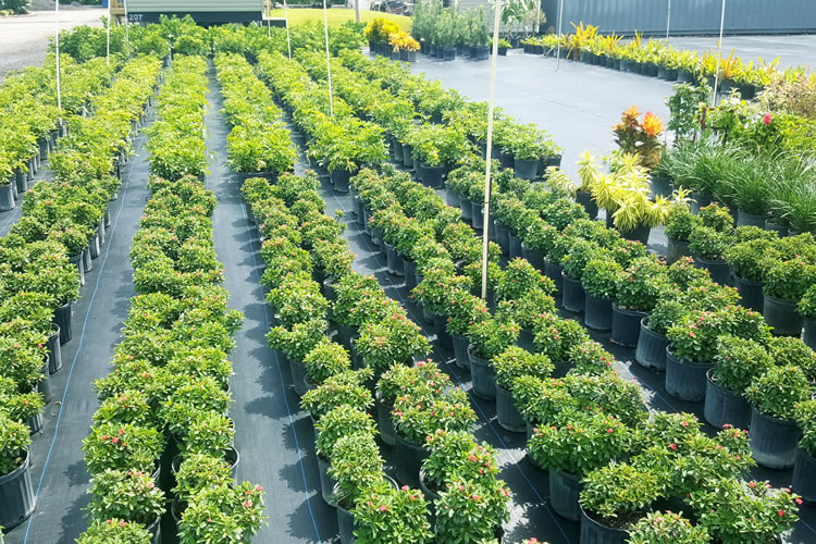 buy-plants-for-your-house