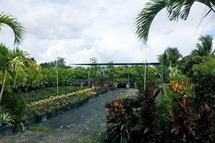 buy-plants-lake-worth-florida