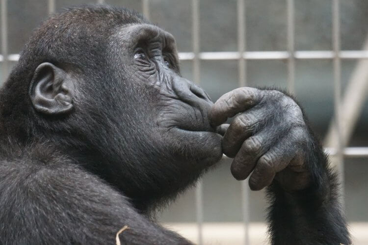 ape thinking hard 750x500 8 Steps to a Magnificent Home Landscaping Project