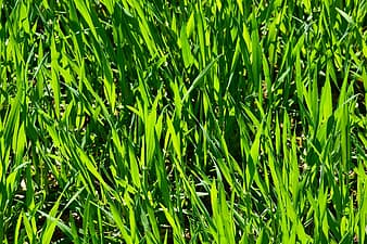 lawn-fertilization-service