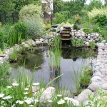 how-to-clean-a-pond