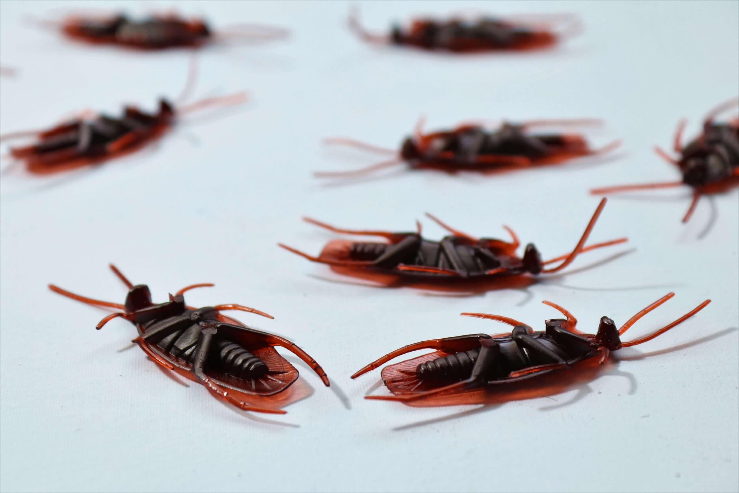 Protek-America-tips-for-winter-pest-control