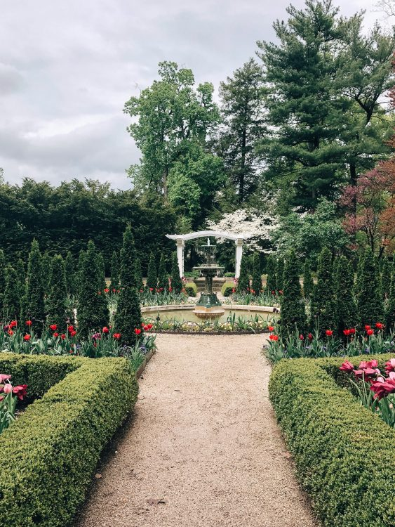 Landscape for your garden