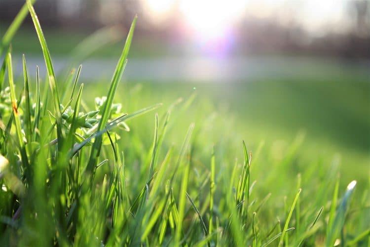 How Often Should You Fertilize A Lawn
